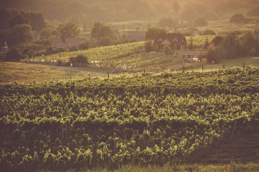 A visit through Polish wine country