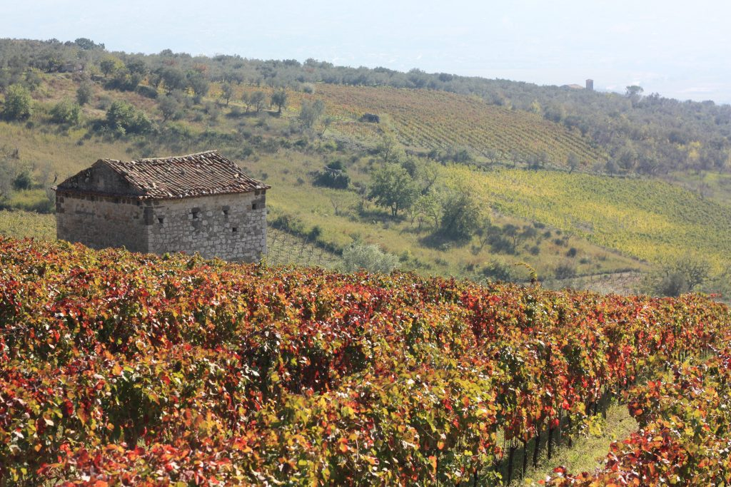No pyrrhic victories for the winegrowers of ancient Samnium
