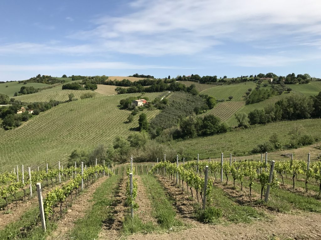 Marche wines hit the high mark