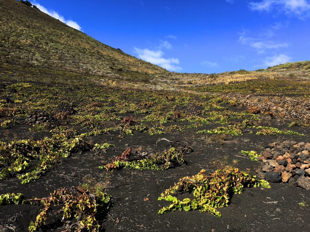 Making wines under the volcanoes in La Palma