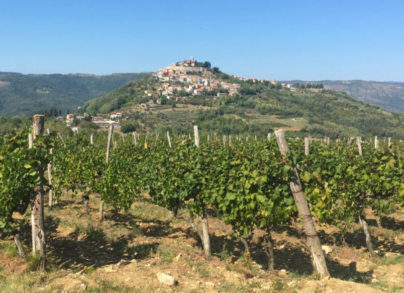 Falling in love with Malvasia (and truffles)