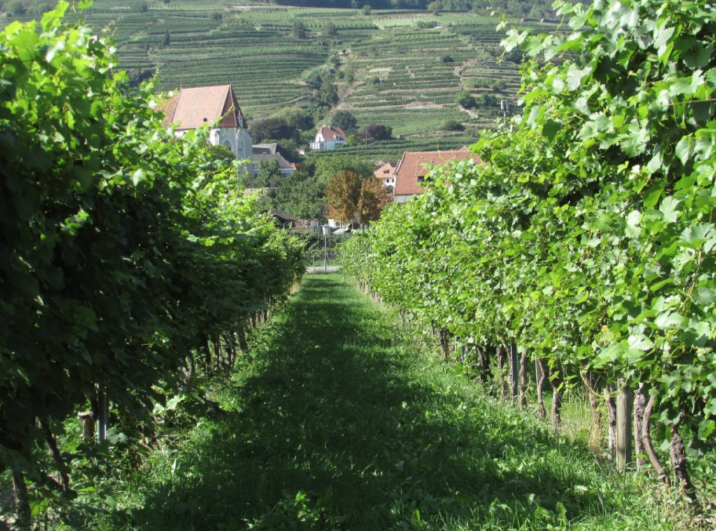 Why Austria is a hot bed of single-vineyard wines