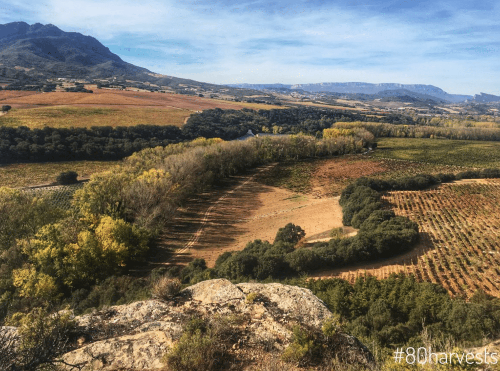 Tasting through the 'Grandes Pagos' of Spain
