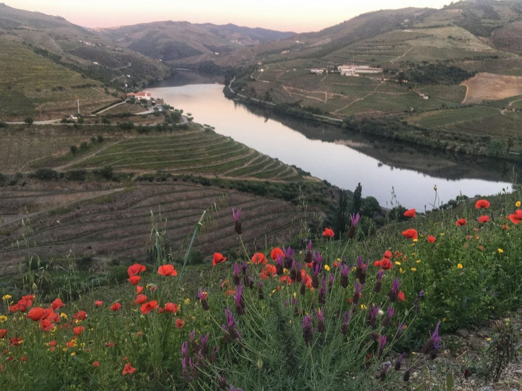Discovering the new Douro