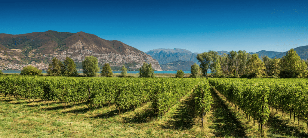 Franciacorta: It's all in the 'lies'…