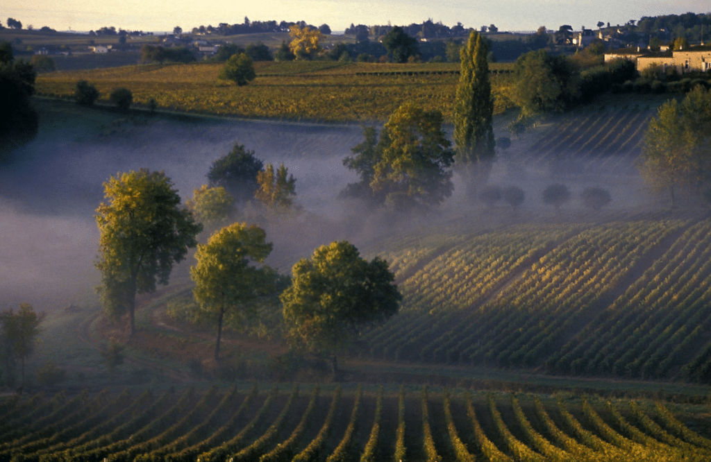 Uncovering the sweet spots of Bordeaux