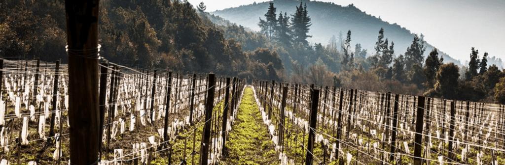 Tumunan Vineyard