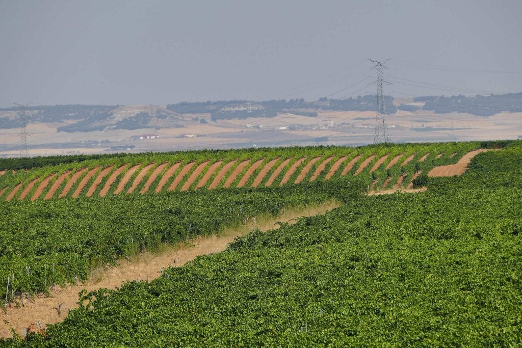 The Spanish wine region with a secret white weapon