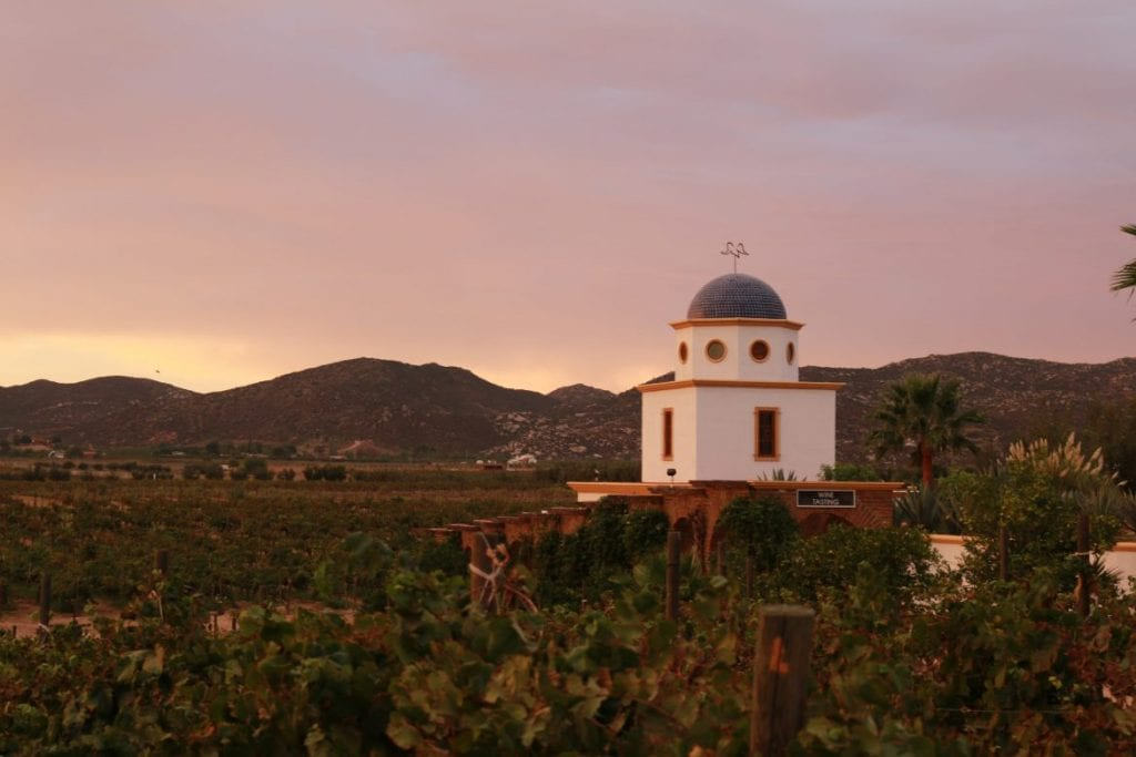 Salivating over Mexican wine country