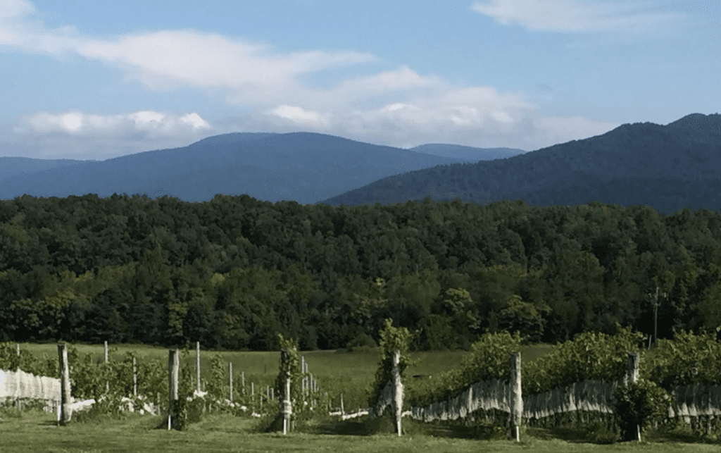Virginia wine: beyond the verge