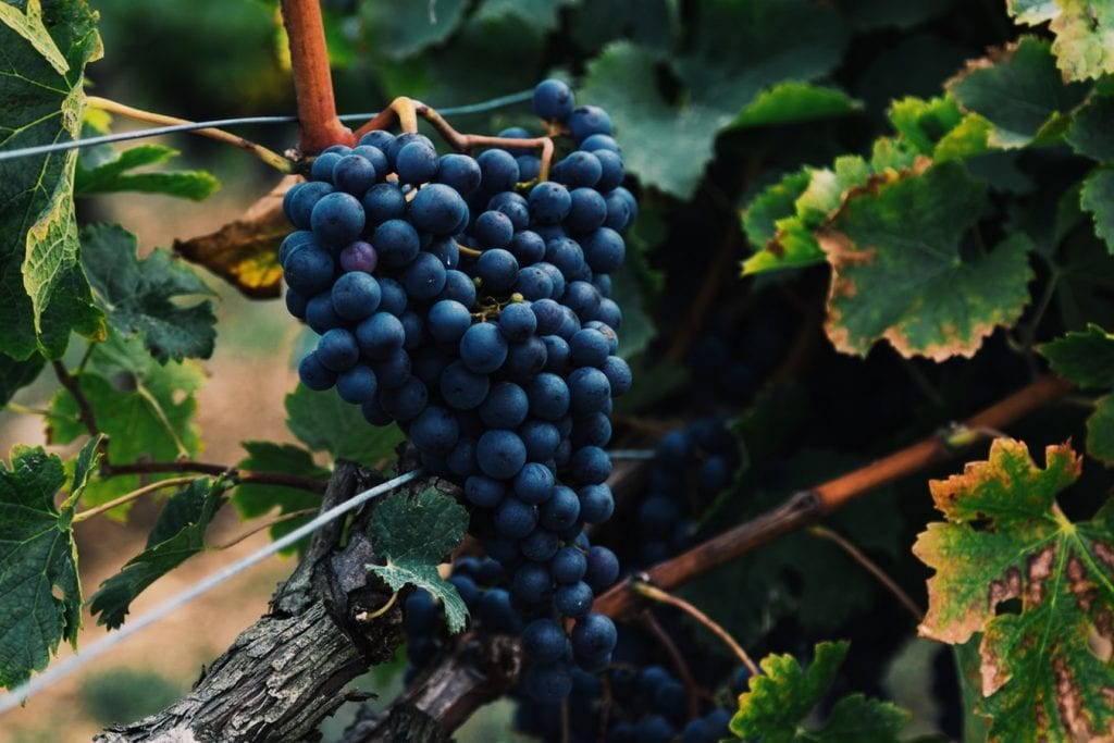 Tannat: Uruguay's unlikely champion