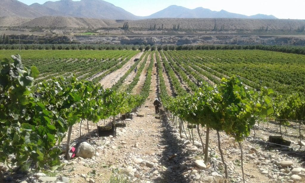 Zooming in on coastal Chilean Pinot Noir