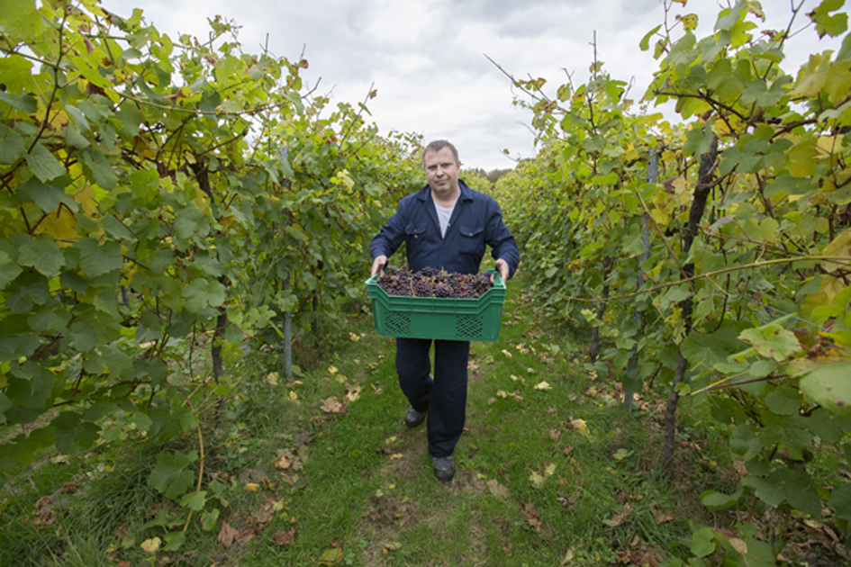 English wine: much more beyond bubbles