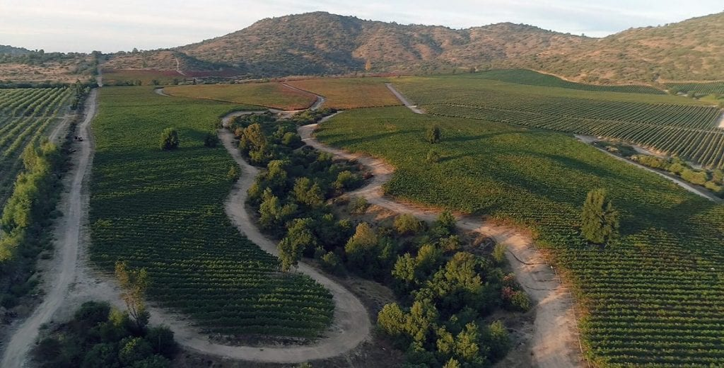 TerraNoble's quest for terroir Carmenère