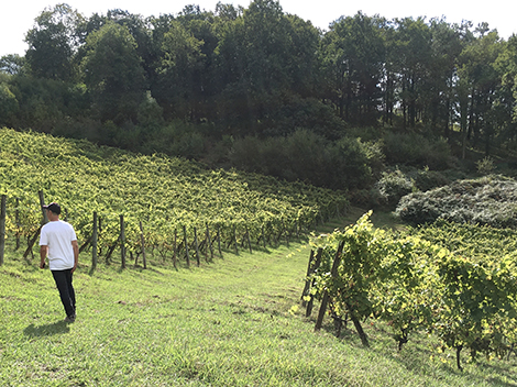 Txakoli producers to check out